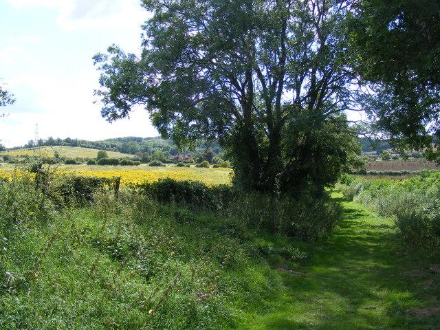 green lane approaching Offley Grange from NE