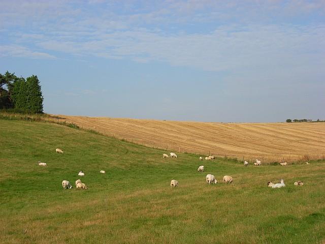 Farmland near Idmiston