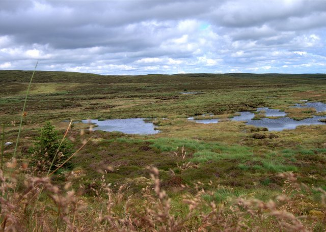 Boggy pond on Pant y Gwartheg
