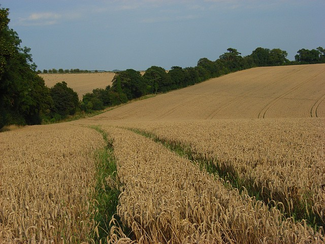 Farmland, Salterton