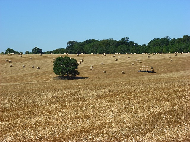 Farmland, East Tytherley