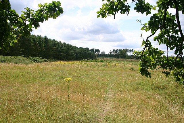 Lambpit Hill, Thetford