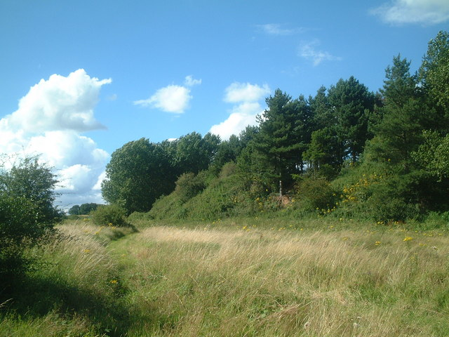 Wooded embankment  south of  Shirley Quarry