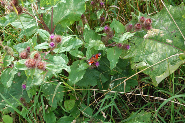 Riverbank Vegetation with Butterfly