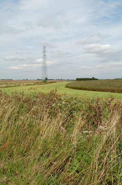 Pylon and Broad Beans