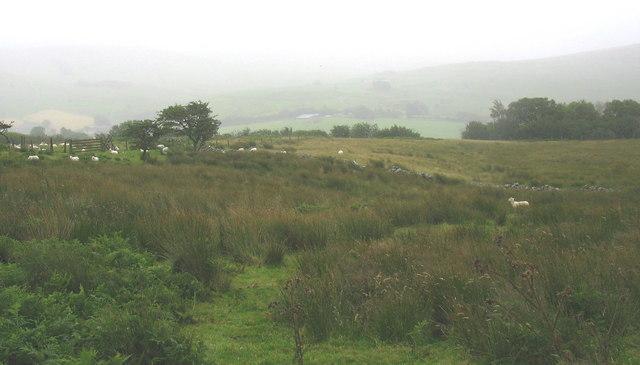 Sheep on moorland fringe land