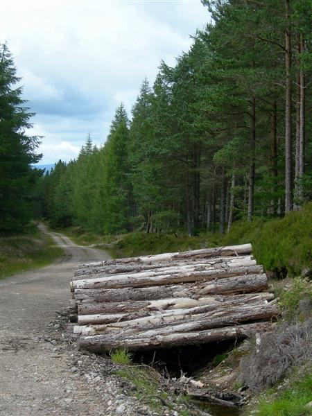 Track In Newtyle Forest