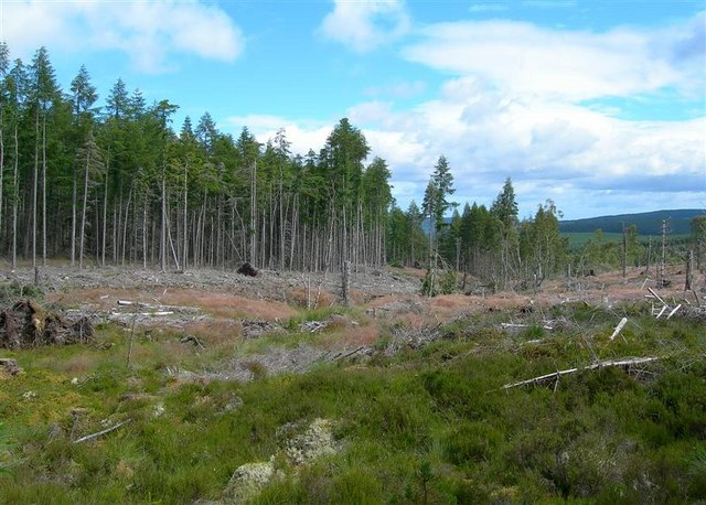 Newtyle Forest