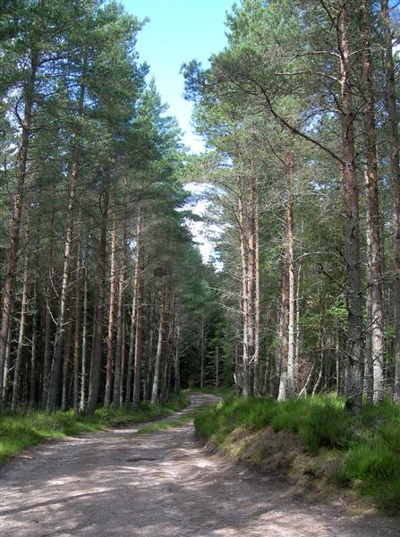 Darnaway Forest Track