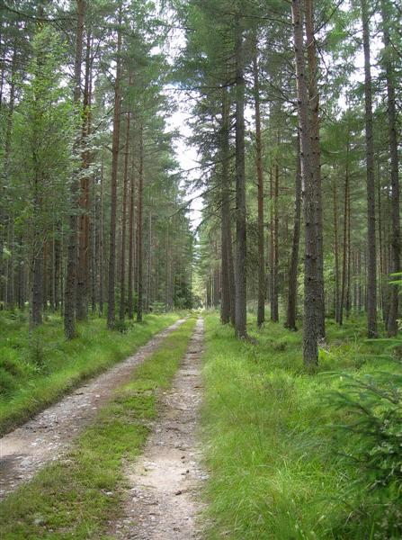 Darnaway Forest Track