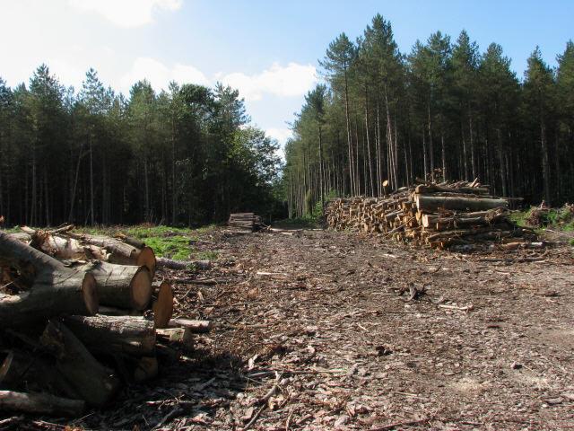 Tree harvesting