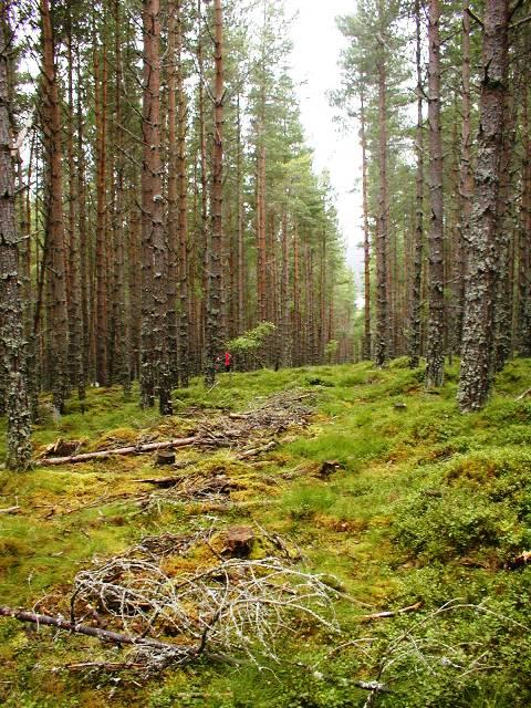 Forest Ride, Inshriach