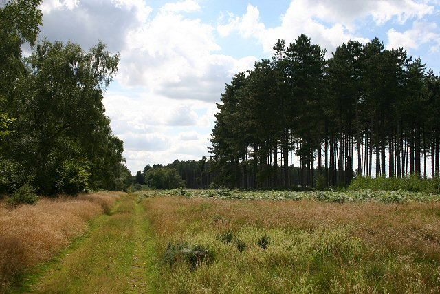 Warren Wood, near Thetford