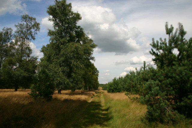 Footpath to Santon Downham