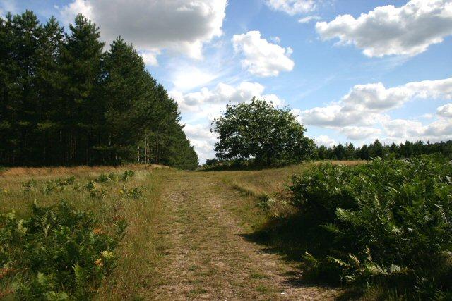Little Ouse Path, near Thetford