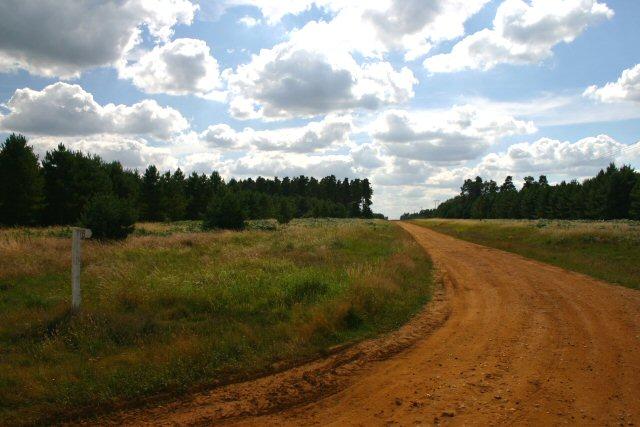 Forest track, Warren Wood