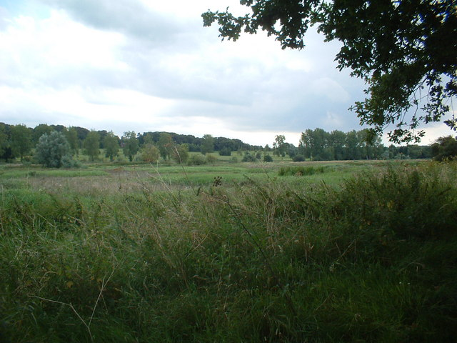 View From Back Lane Ringland