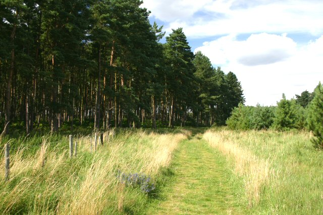 Little Ouse Path, Thetford Forest
