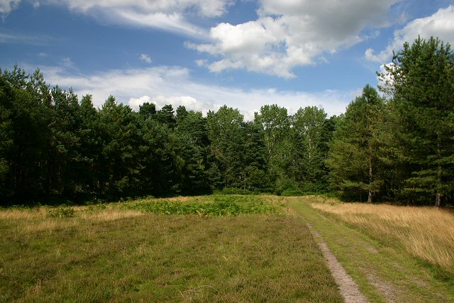 End of the clearing, Thetford Forest