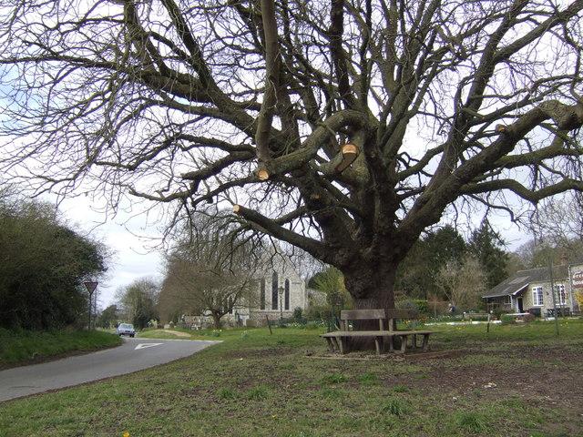 Cockley Cley Oak