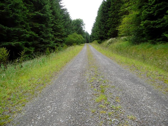 Track in the Davington Forest