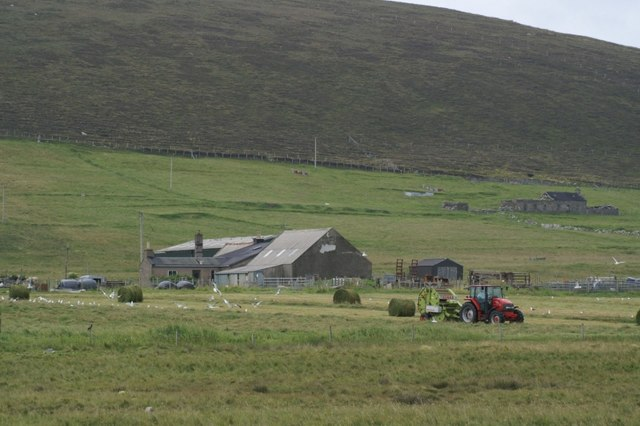 Silage-making at Ungirsta, Haroldswick