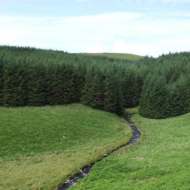 Afon Doethie Fawr leaves the Berwyn Plantation, Ceredigion