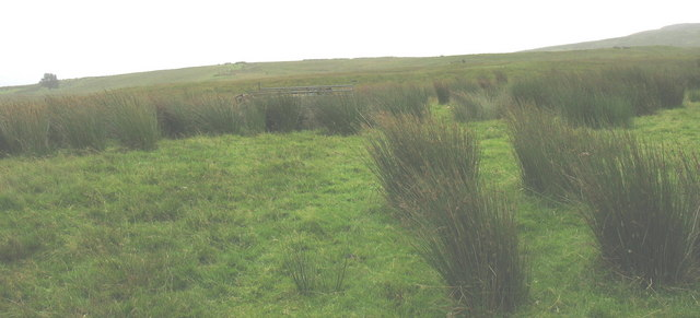 Grade 5 agricultural land suitable only for grazing sheep and hardy cattle