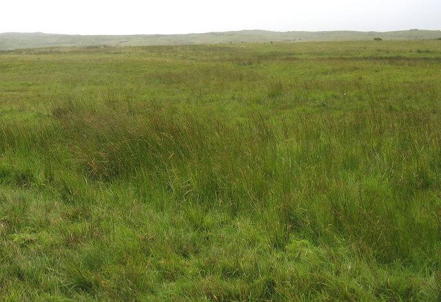 Waterlogged moorland