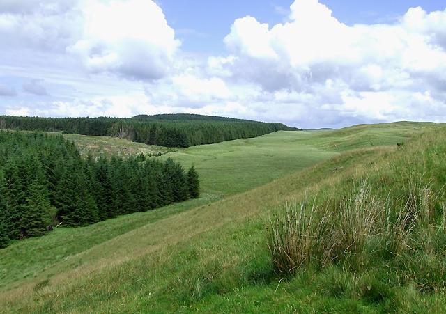 Moorland and Forest near Esgair Cerrig, Ceredigion