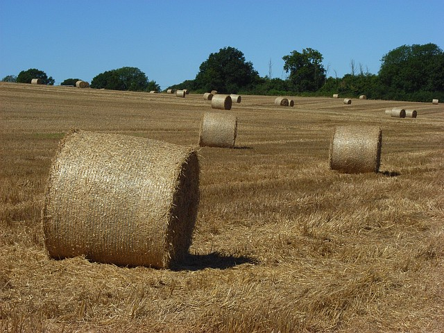Bales at Middle Winterslow
