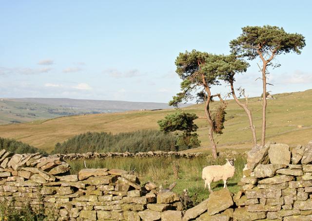 Lamb in a copse