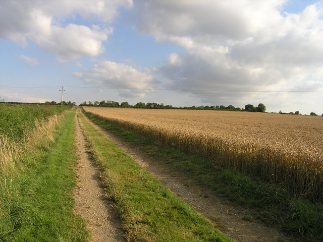 Track and wheat field