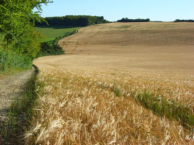 Farmland near Pitton