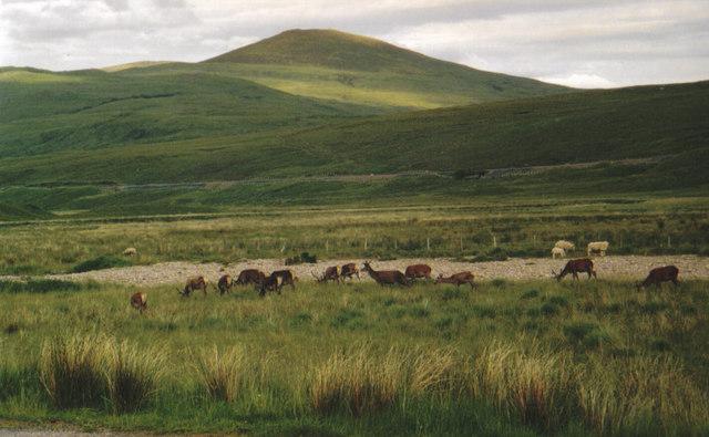 Deer on the 'back road'
