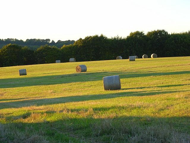 Hay meadow near Lopcombe Corner