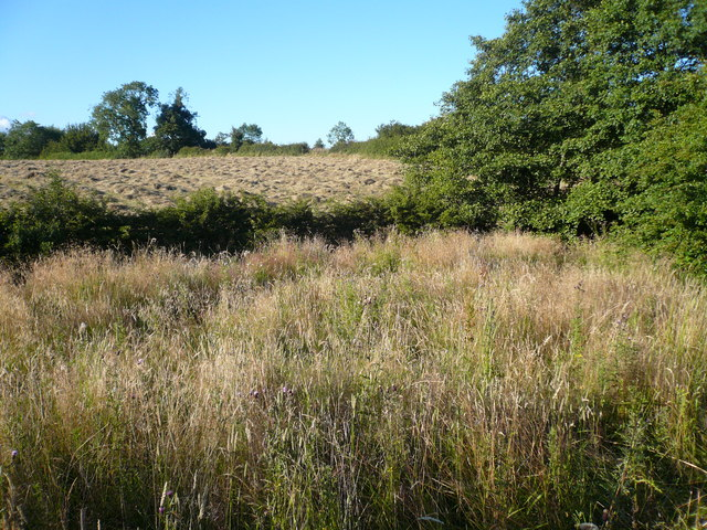 Former Reedbed - Near Catty Pond