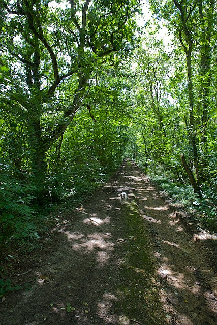 Footpath through Belmont Copse, Wootton Common