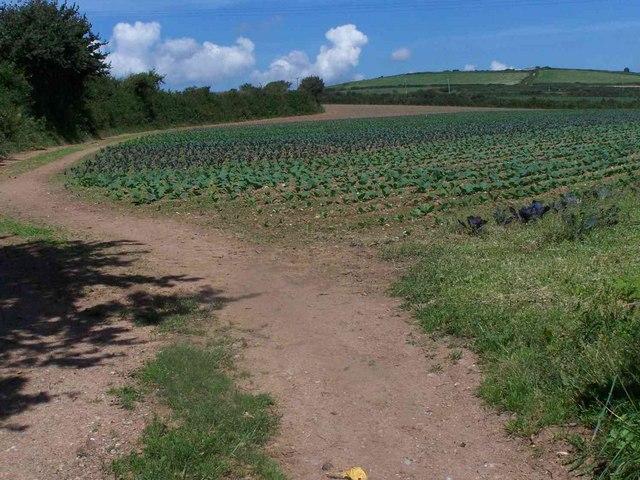 Field Near Whitlocksworthy