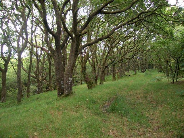 Grassy woodland track