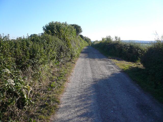 Hallgate Lane Approach to Bushypark Farm