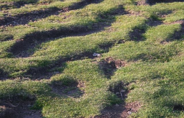 Soil Creep, Millennium Hill