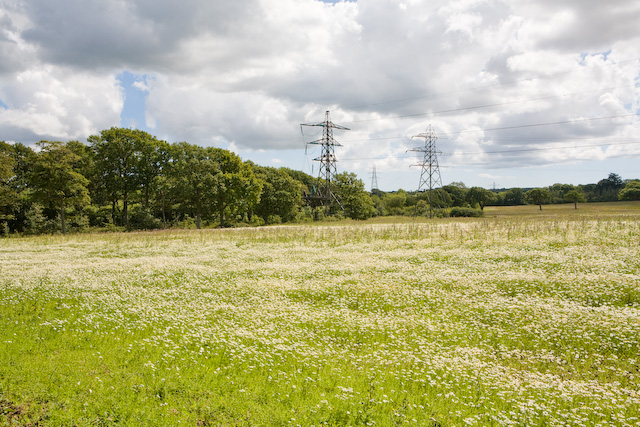 Field and pylons south of Belmont Copse, nr Wootton Common