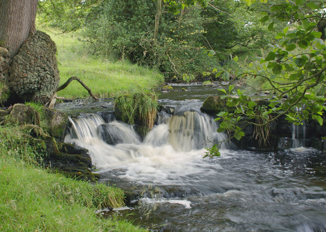 Feeder stream for Leagram brook