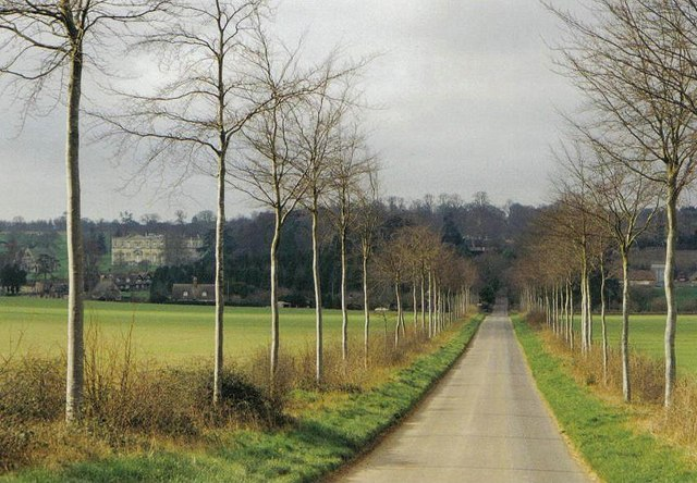 Moor Crichel: avenue of spindly trees