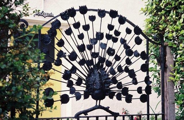 Morcombelake: ironwork peacock