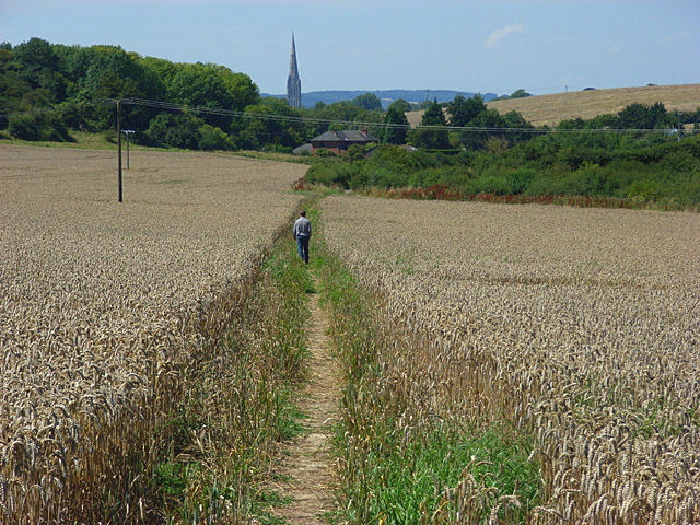 Footpath through wheat, Clarendon Park