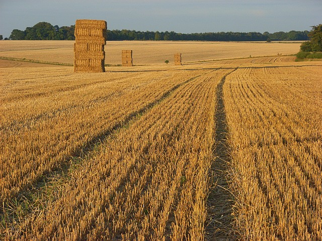 Harvested farmland, Great Durnford