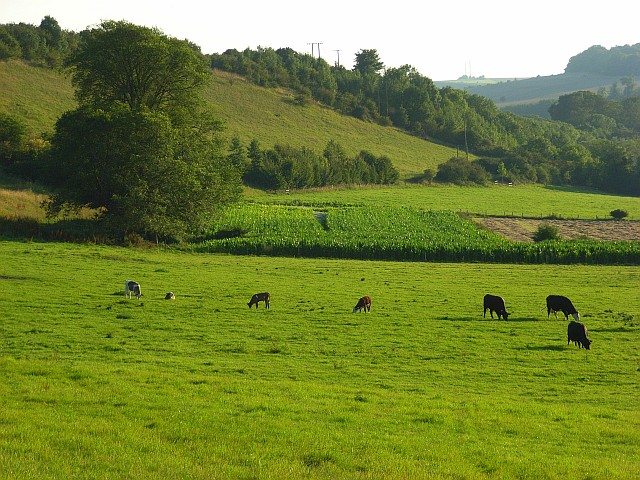 Downland, Great Durnford