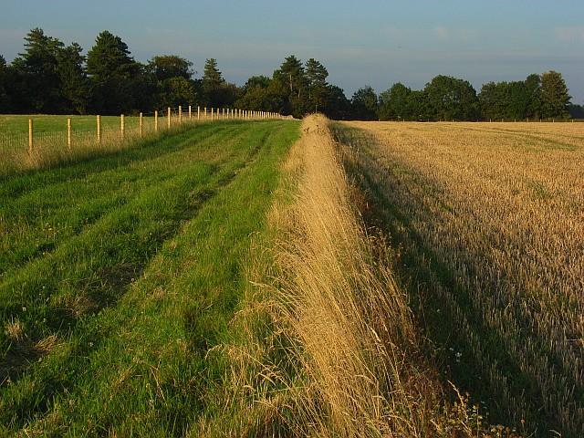 Farmland, Great Durnford